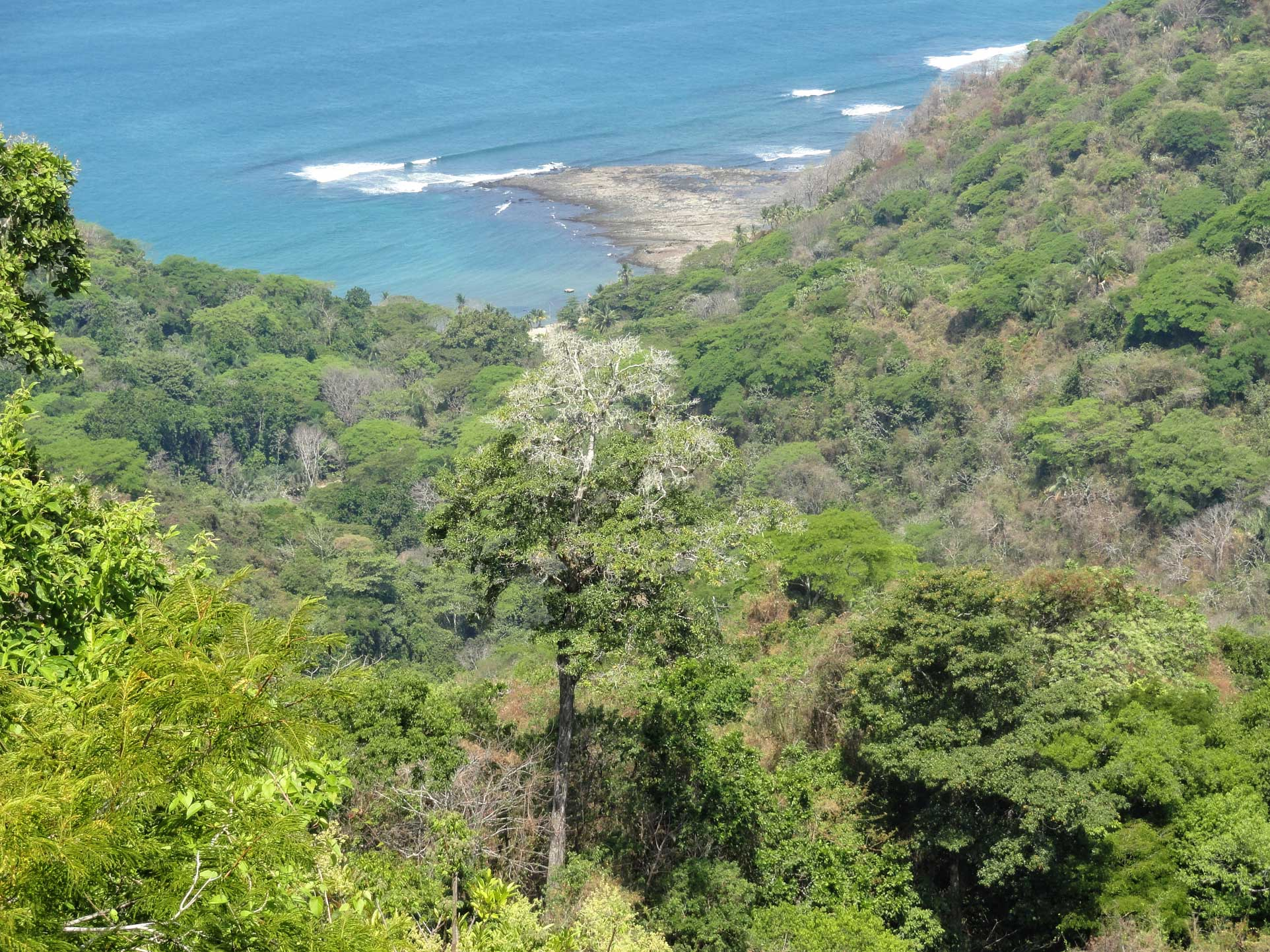 Rain Forest and pacific ocean at Hotel Villa Caletas